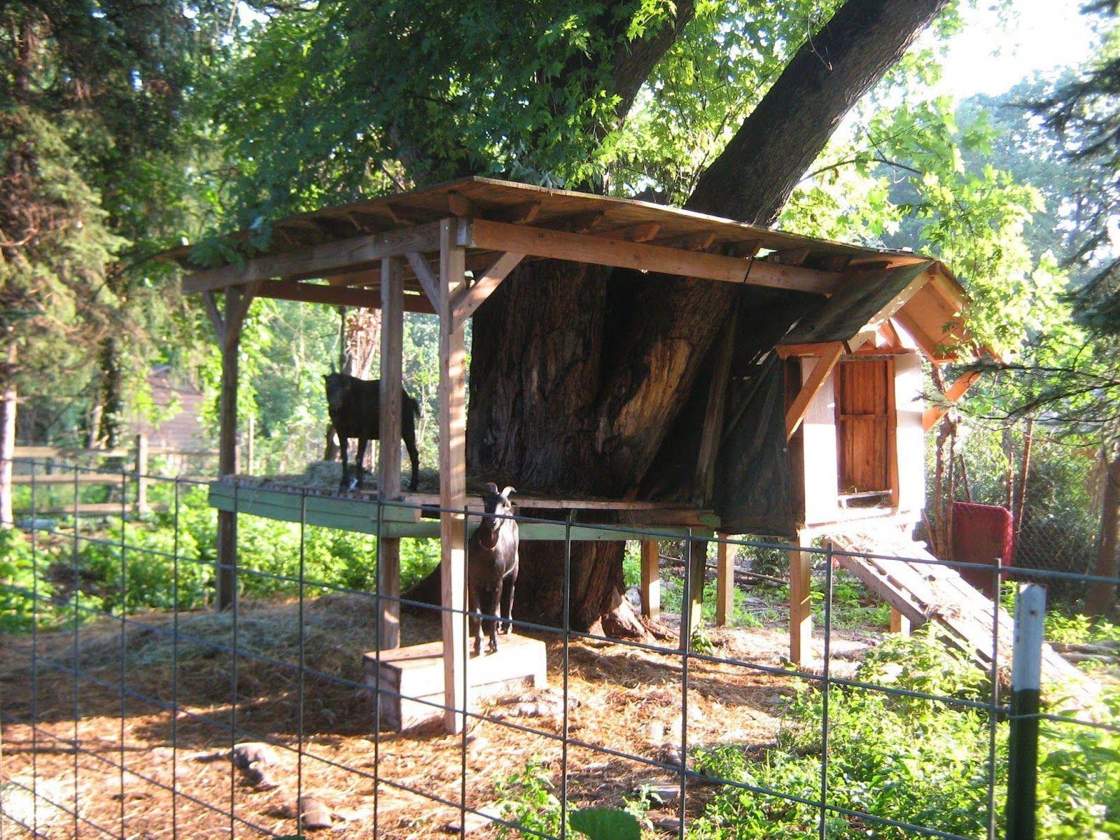Goat Tree House Yet Another Option Under Consideration Here At Valhalla Goat House Goat Shelter Goat Playground