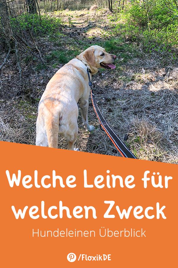 Welche Leine Fur Welchen Zweck Hundeprodukte Hunde Hundeleine