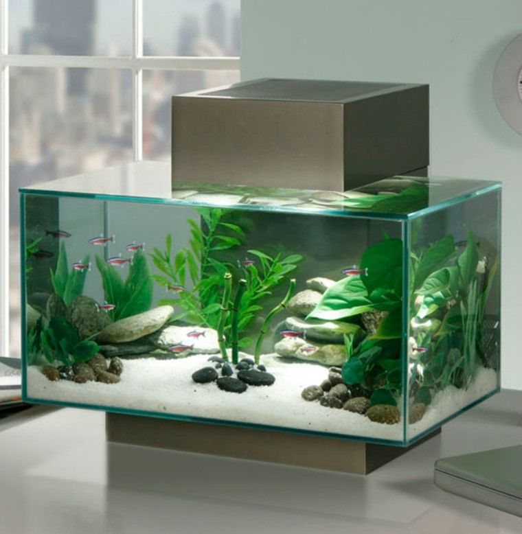 deco originale aquarium. Black Bedroom Furniture Sets. Home Design Ideas