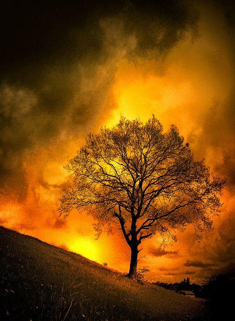 Nature (Purification - Arbre de Feu) by Tiquetonne2067 on Flickr.