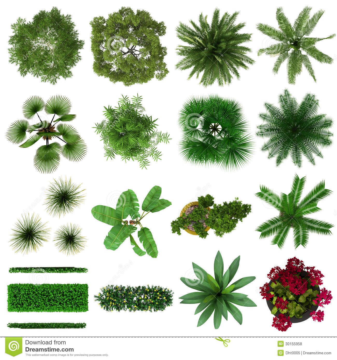Tropical Plants Collection Top View Tree Photoshop Trees Top View Landscape Design