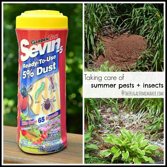 Taking Care Of Summer Pests Insects With Sevin Dust Sponsored Partnership Garden