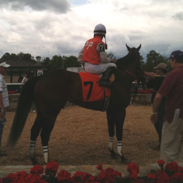 My horse won!