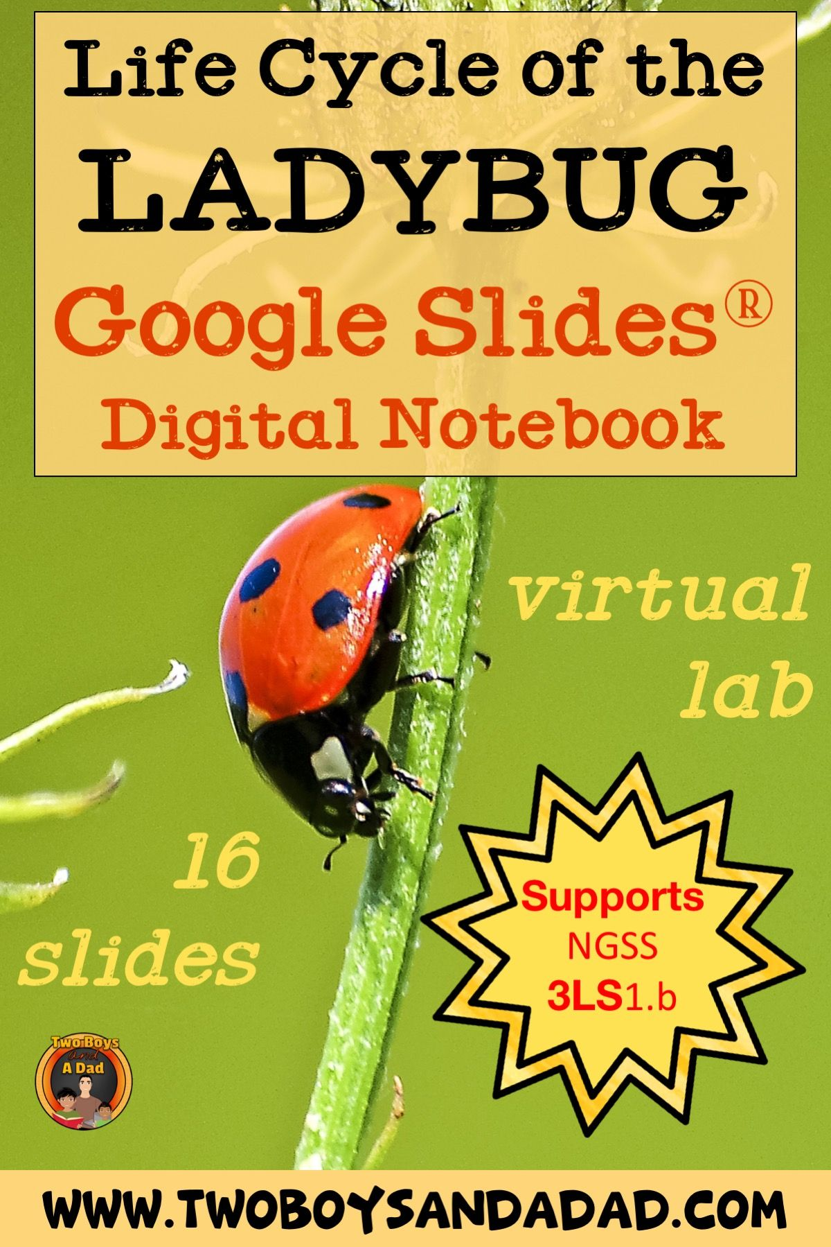 Life Cycle Of The Ladybug Digital Interactive Notebook For