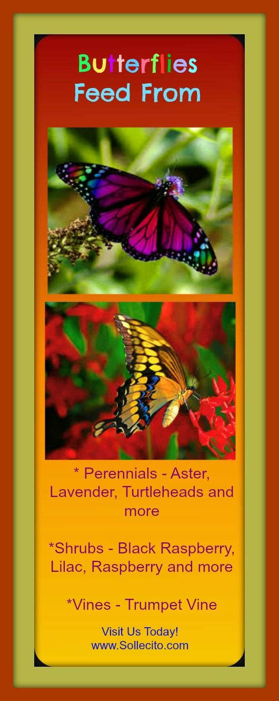 www.Sollecito.com - Butterflies feed from. #Butterflies #butterflyGardens #Flowers #LandscapingIdeas #LandscapingTips