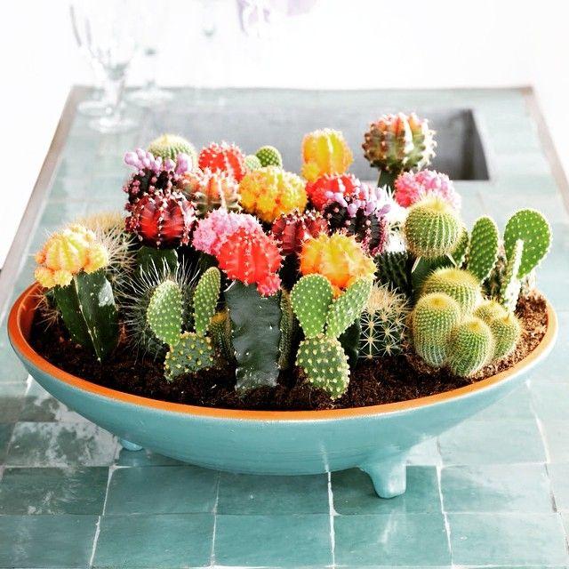 Mini jard n de cactus en una casa peque a podemos tener - Cactus en macetas pequenas ...