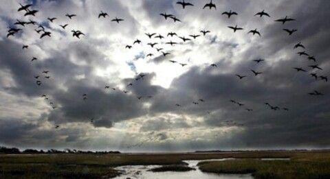 الذكريات الجميلة ك سرب من الطيور المهاجرة لا يمكن القبض عليها ولكن يمكنك الاستمتاع بمرورها امامك Oceans Of The World Bird Migration Climate Change