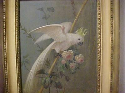 Alfonso T. Toran (1896-1965) Oil on Board COCKATOO Parrot Painting / Bird SIGNED https://t.co/rKxvilc2aA #Homedecor https://t.co/qmPM4AYoHQ