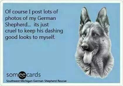 Southwest Michigan German Shepherd Rescue Every State Has One