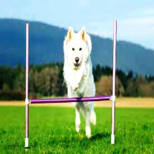 Dog Play Green Field Sky Hill Dog Training Training Your Puppy