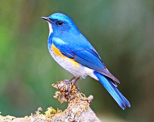 Attract Beautiful Birds to your Backyard with special feed