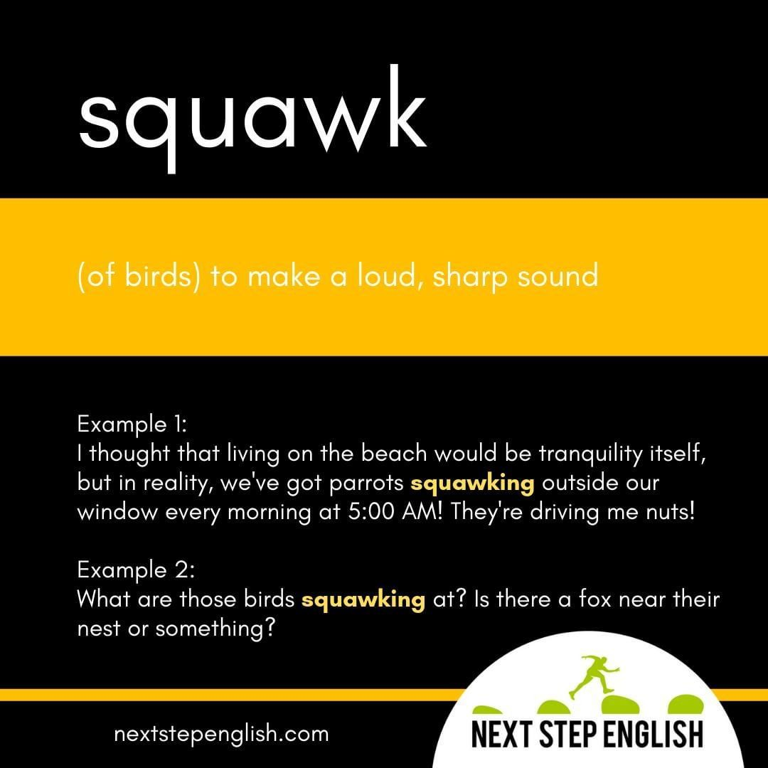 Word Of The Day Squawk Wordoftheday Learnenglish
