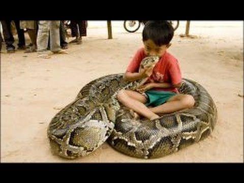Do Snakes Make Good Pets Snakebytestv Animalbytestv Burmese