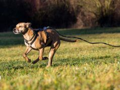 8 Tips On Training Dogs Not To Run Away For Walking Off Leash
