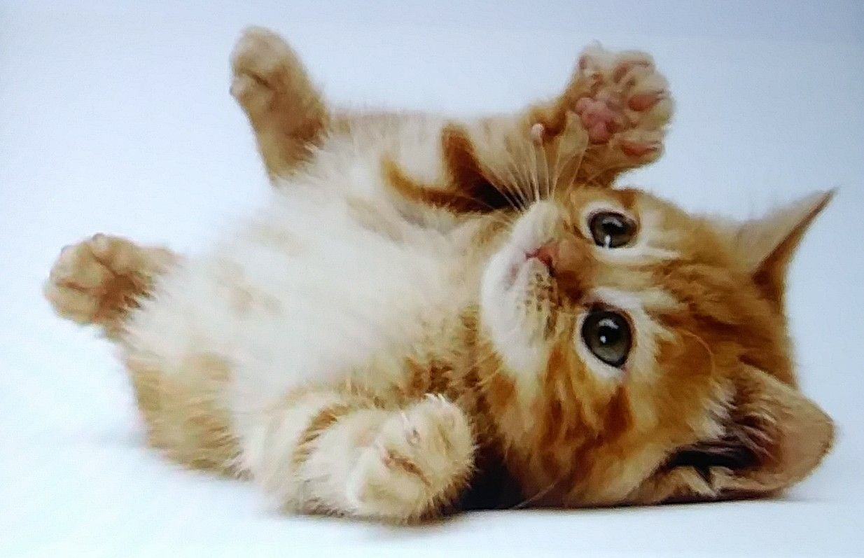 Love This Adorable Beautiful Baby Kitten Kittens Cutest Cute Animals Cute Cats