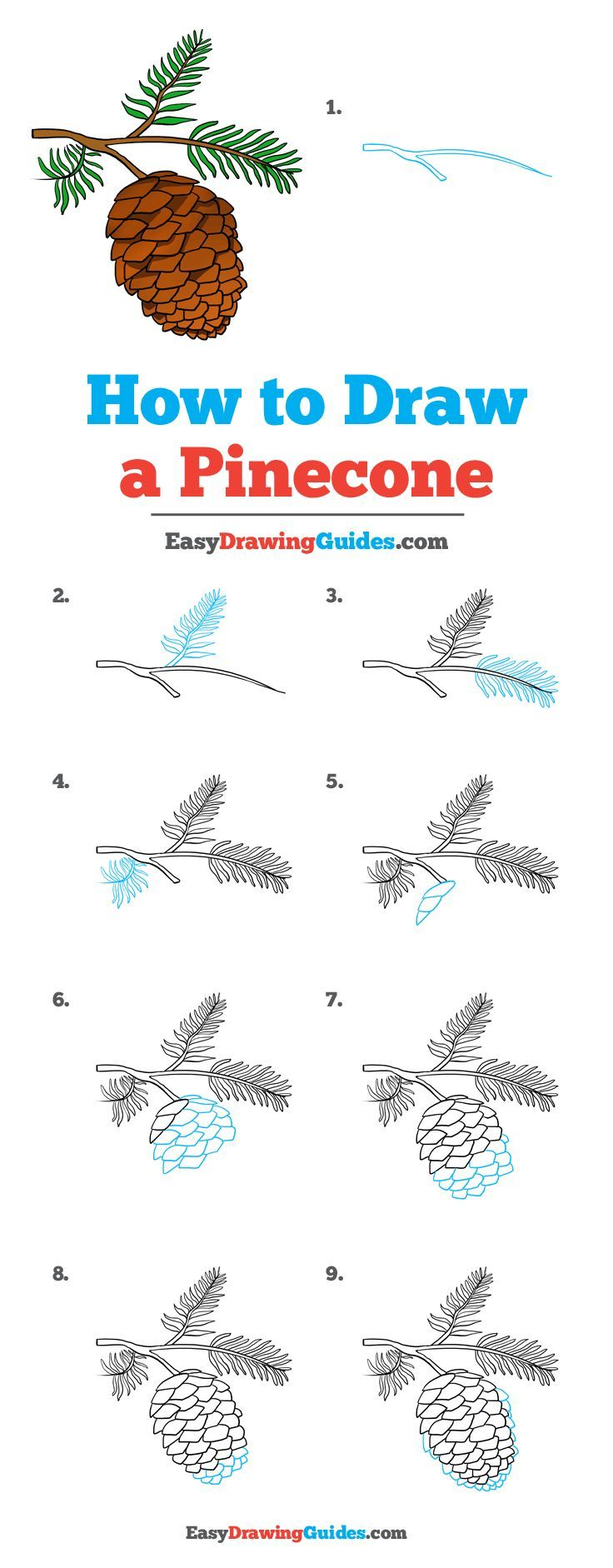 How to Draw a Pinecone Drawing tutorial easy, Easy