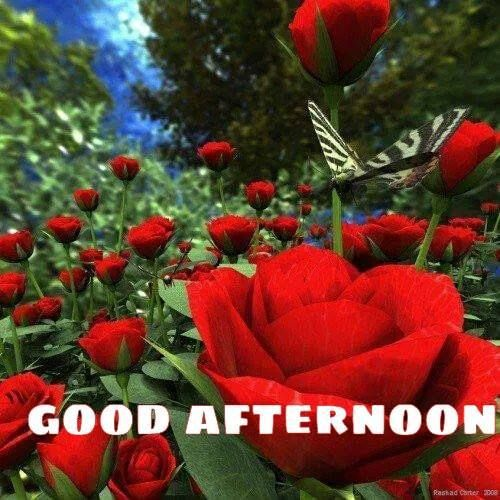 Afternoon love and blessings | GREETINGS! | Pinterest ... Good Afternoon Images With Roses