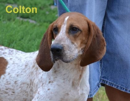 Adopt Colton On Humane Society Adoption Catawba County