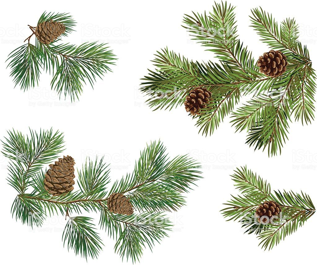 Vector Collection Of Christmas Tree Branches With Pine Cones Christmas Tree Branches Tree Tattoo Color Tree Drawing Simple