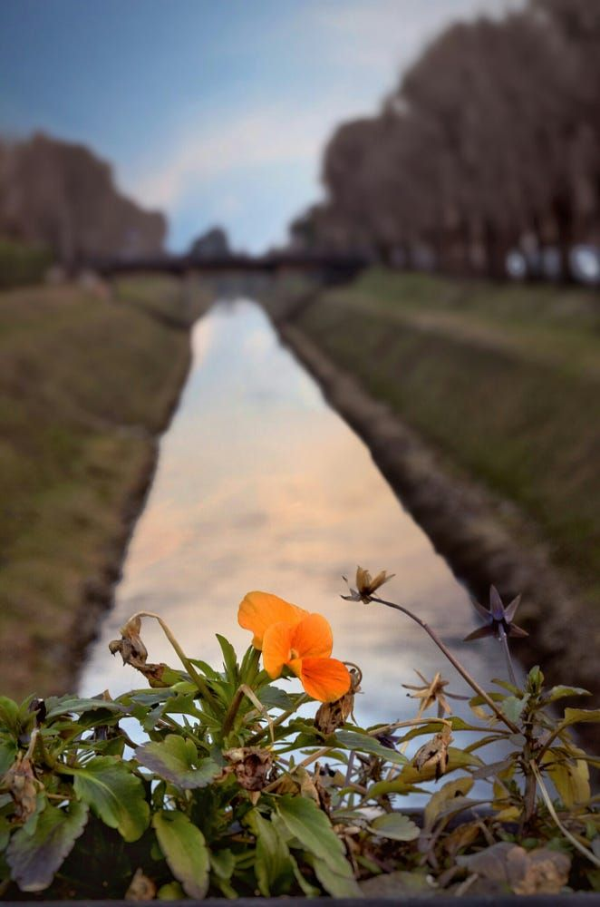 Flower & river by Luca Meggiolaro on 500px