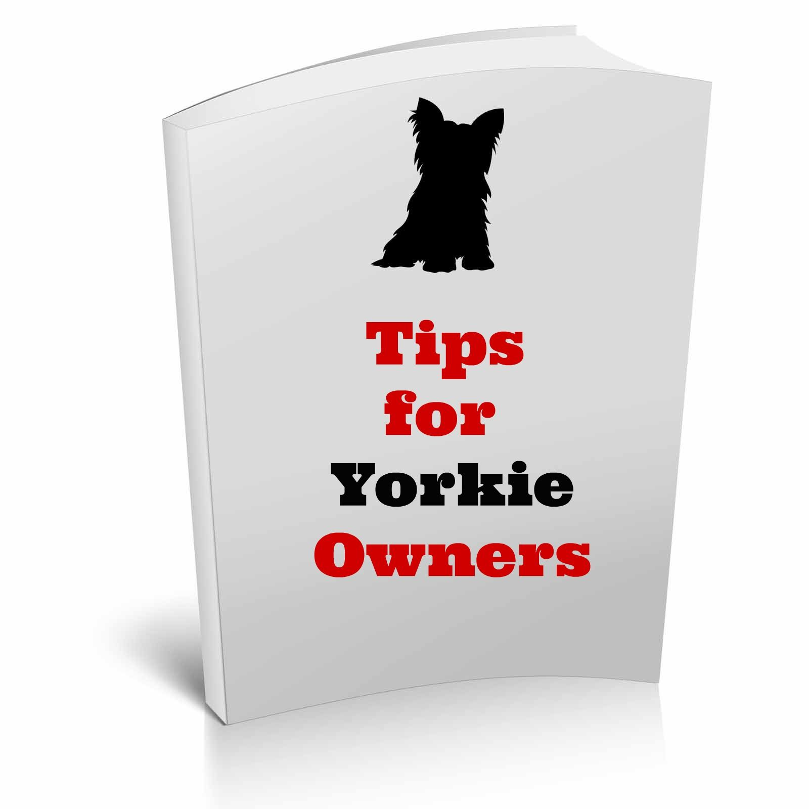 Taking Care Of A Yorkshire Terrier Is By All Means Not So Harsh Or