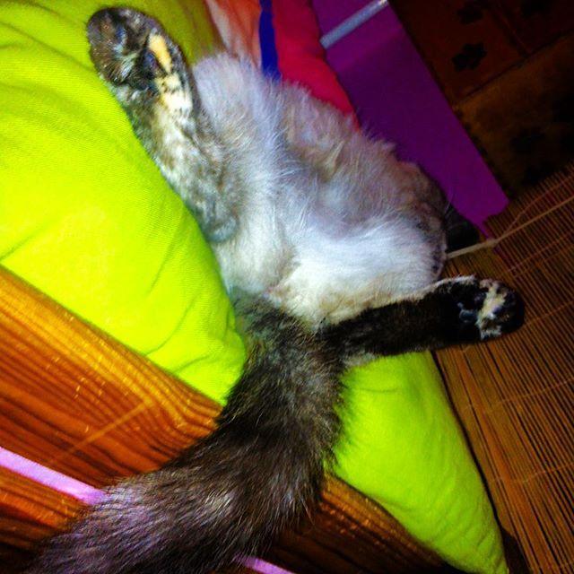 #lol   #cat #cats #TagsForLikes.com #TagsForLikesApp #catsagram #catstagram #instagood #kitten #kitty #kittens #pet #pets #animal #animals #petstagram #petsagram #photooftheday #catsofinstagram #ilovemycat #instagramcats #nature #catoftheday #lovecats #furry #sleeping #lovekittens #adorable #catlover #instacat