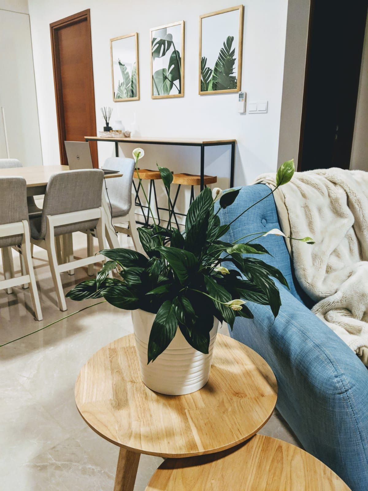 A good house plant is the peace lily scandinavian