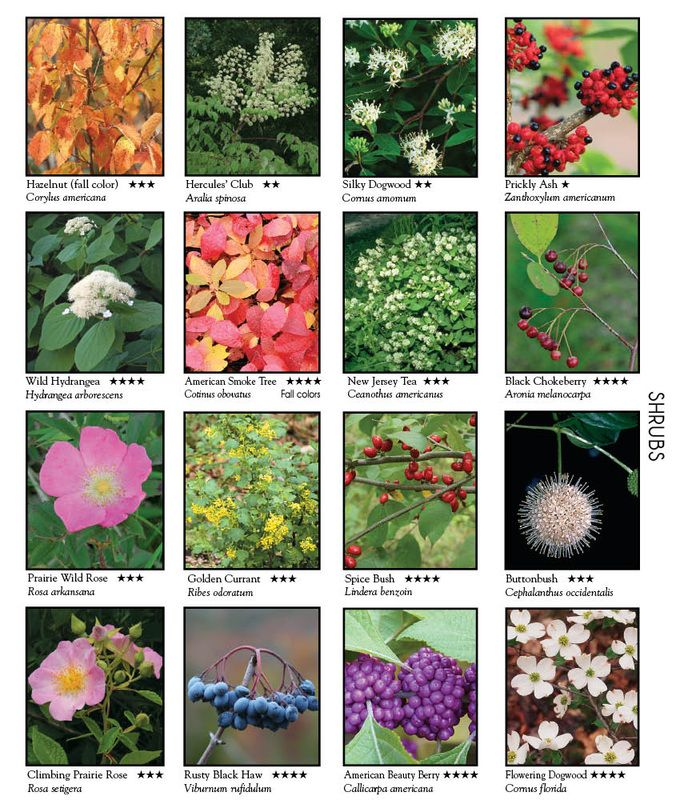 This has the names of numerous wild flowers shrubs and for Landscaping ideas with plant names