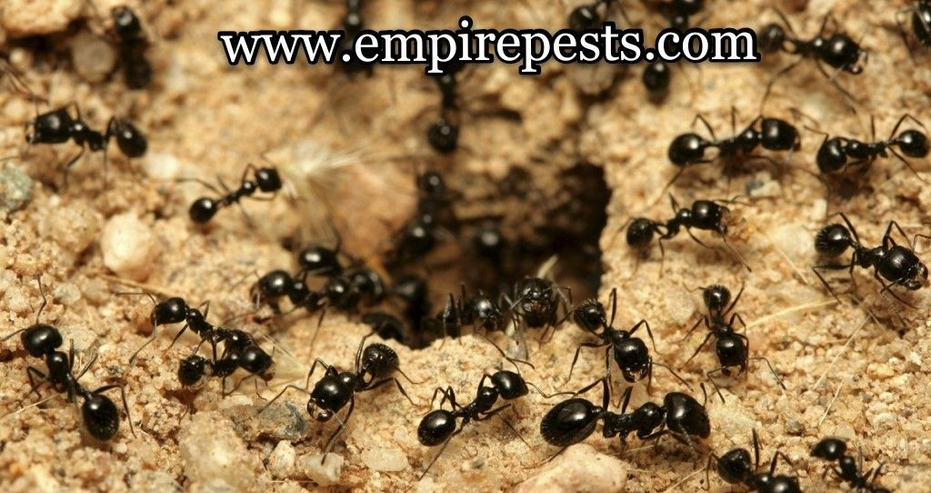 Looking a reliable pest control company! Call Empire Pest