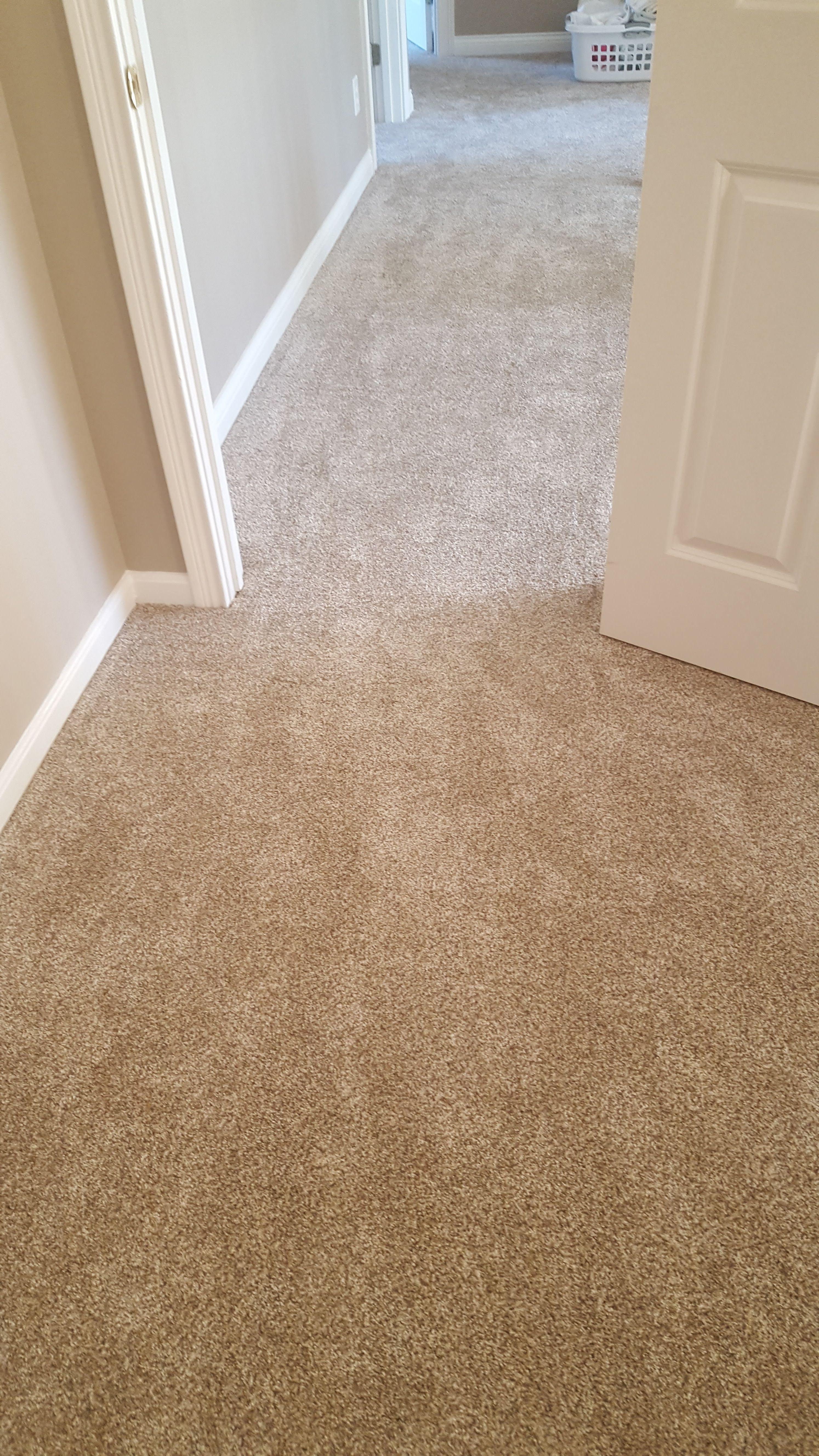 Secret Dream In Tortoise Shell Carpet Samples Burber Carpet Stainmaster