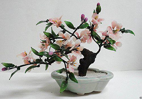 Robot Check Flowering Bonsai Tree Bonsai Tree Bonsai