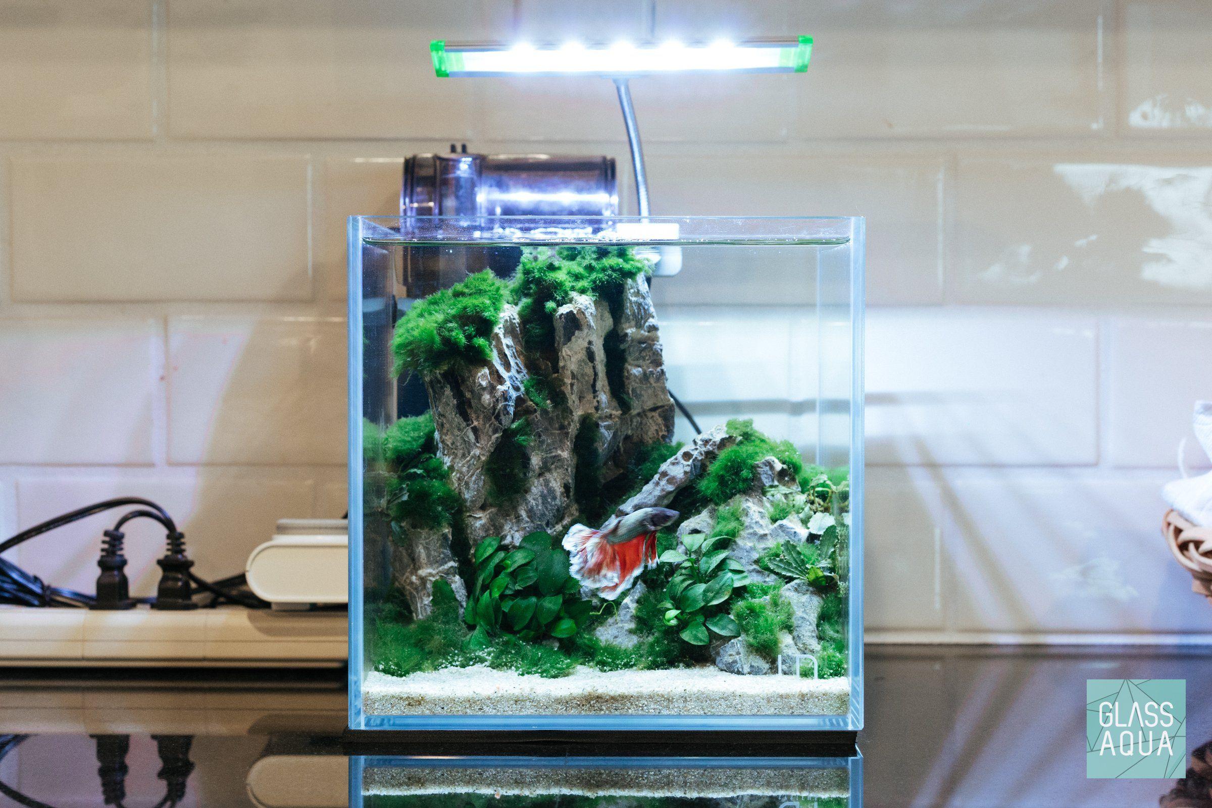 Ultum Nature Systems Planted Cube Betta Tank Betta Fish Tank Aquarium Betta Fish