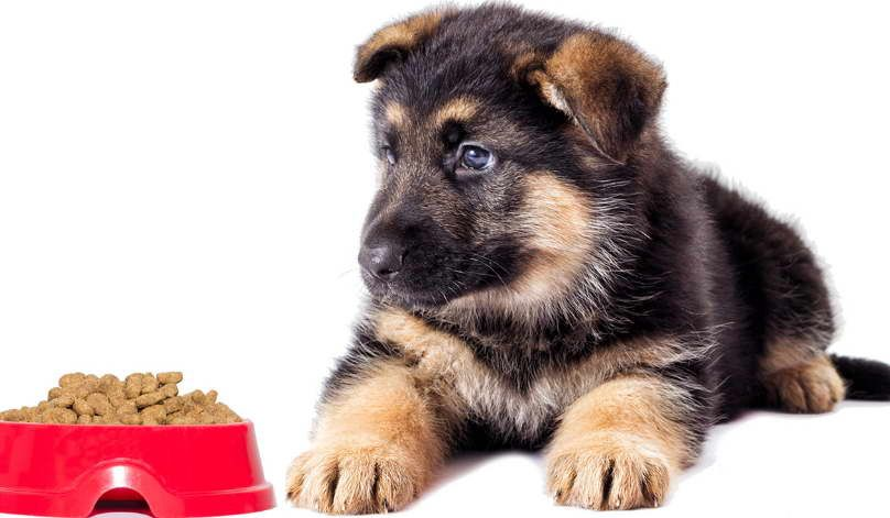 Pin By Lisa S Garage On Dogs Best Dry Dog Food Best Dog Food