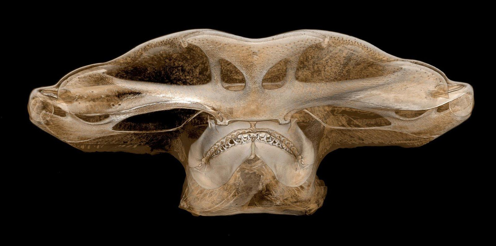 32 Of The Year S Most Amazing Science Pictures Hammerhead Shark