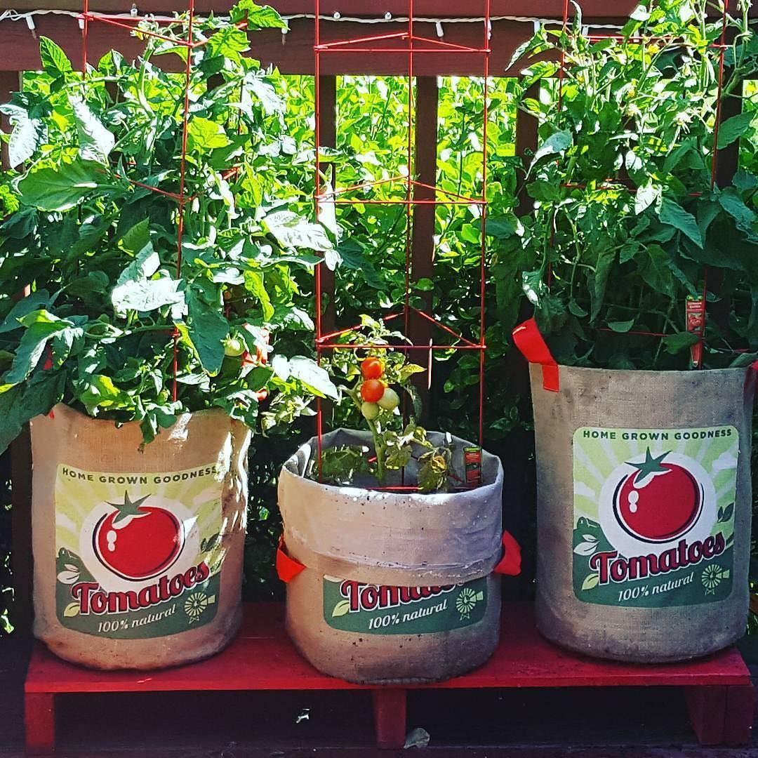 Grow Tomatoes Right In A Pretty Burlap 10 Or 20 Gallon Bag