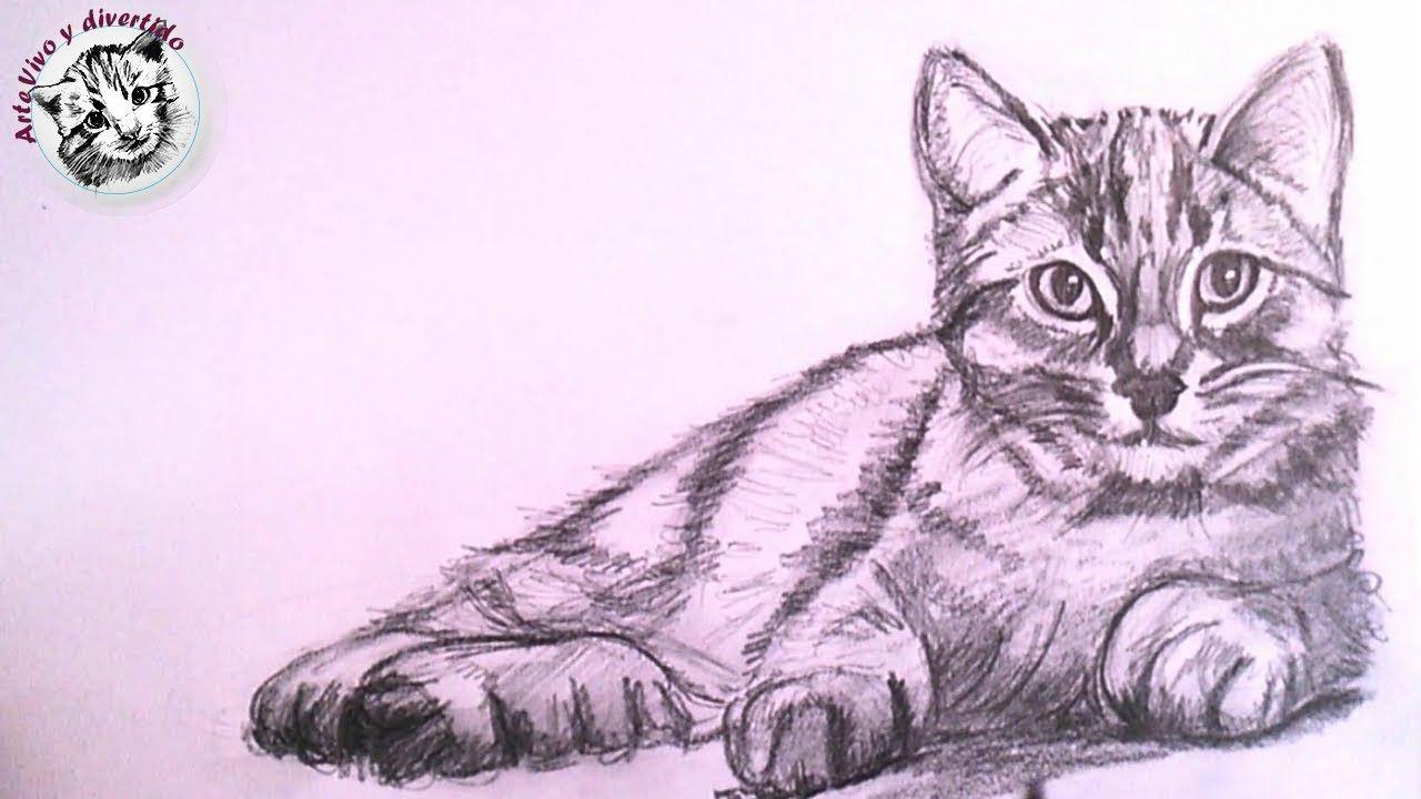 Como Dibujar Un Gato Realista A Lapiz Paso A Paso Como Dibujar Un Gato Como Dibujar Animales Dibujos De Animales Tiernos