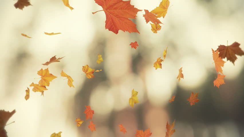 Image Result For Leaves Blowing In The Wind Autumn Landscape Wind Image