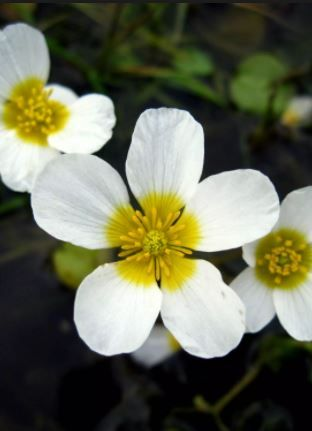 30 most beautiful white flowers in the world hd images flower 30 most beautiful white flowers in the world hd images flower types flower and flowers mightylinksfo