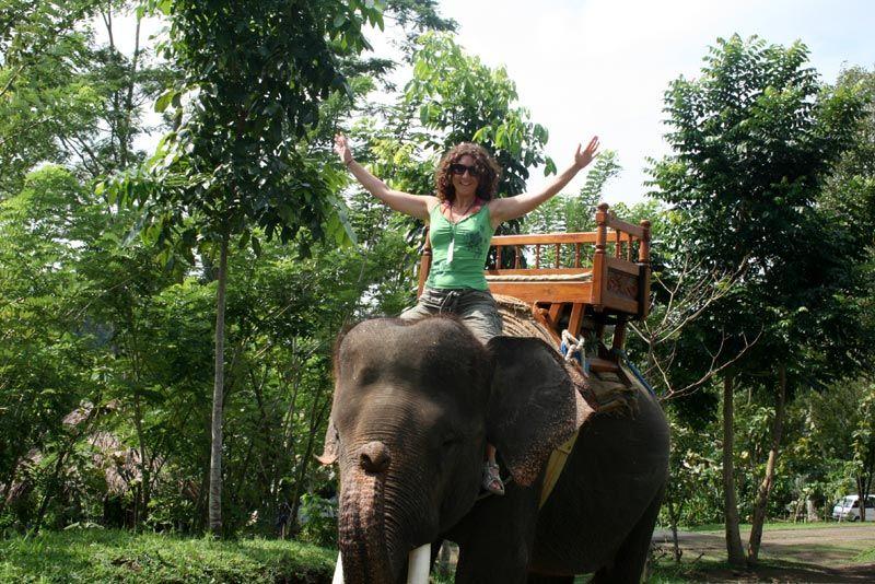 En elefante
