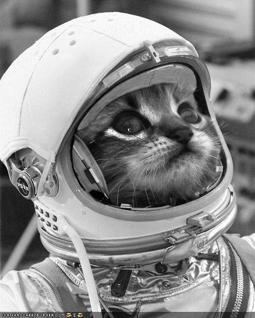 ik heb de keuring al gehad als ruimtekat,geoefend getrajnd, op het laatste nippertje werd ik als nog af gekeurd ,de kattenbak zou ook gaan zweven ,dus dat kon natuurlijk niet,jammer hoor..........