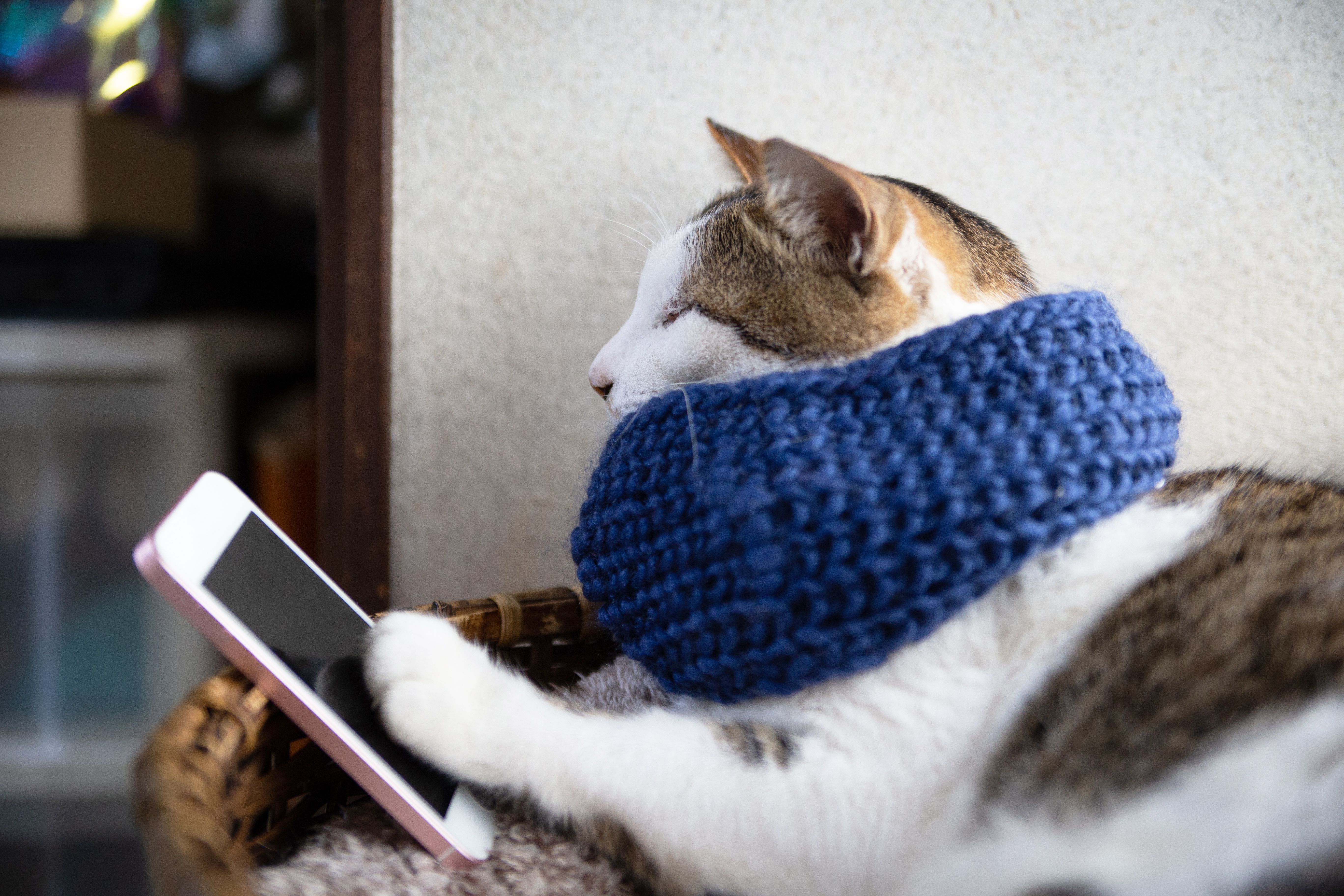 The Best Funny Cat Faces That Ll Make Your Day In 2020 Funny Cat Faces Cute Baby Cats Pet Clothes