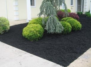 Plants Look So Vibrant Next To The Black Mulch With Images