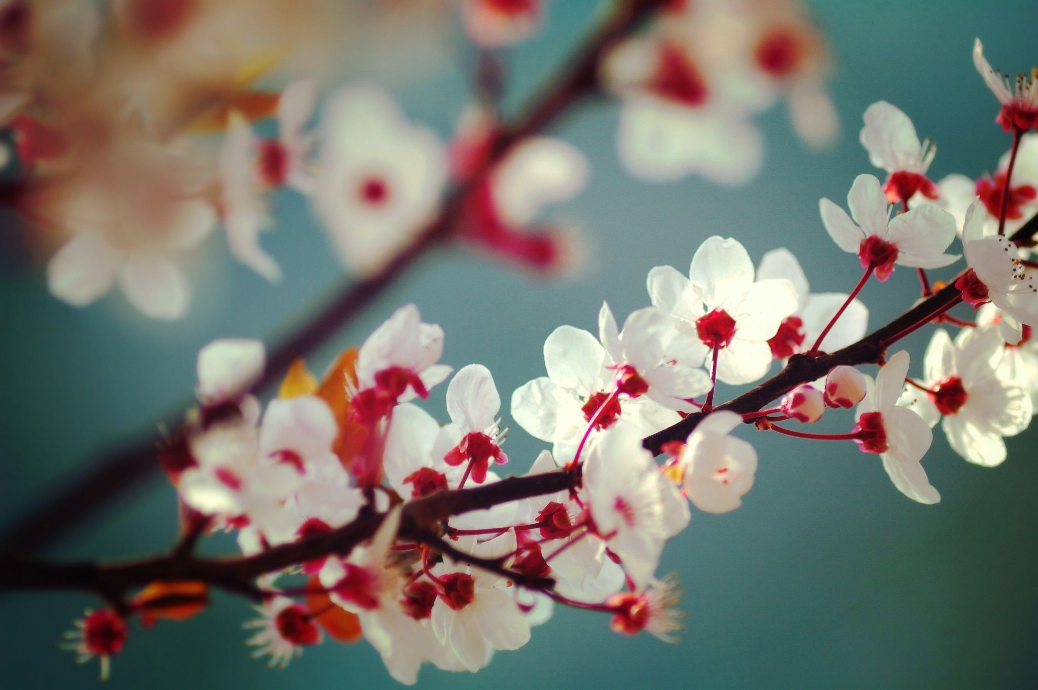 A reminder of Spring by Luiza Lazar on 500px