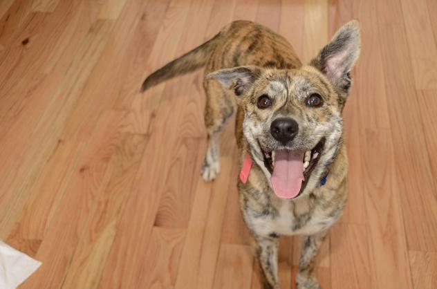 Adopt Sunny Bunny on Dogs up for adoption, Dogs, Shiba inu
