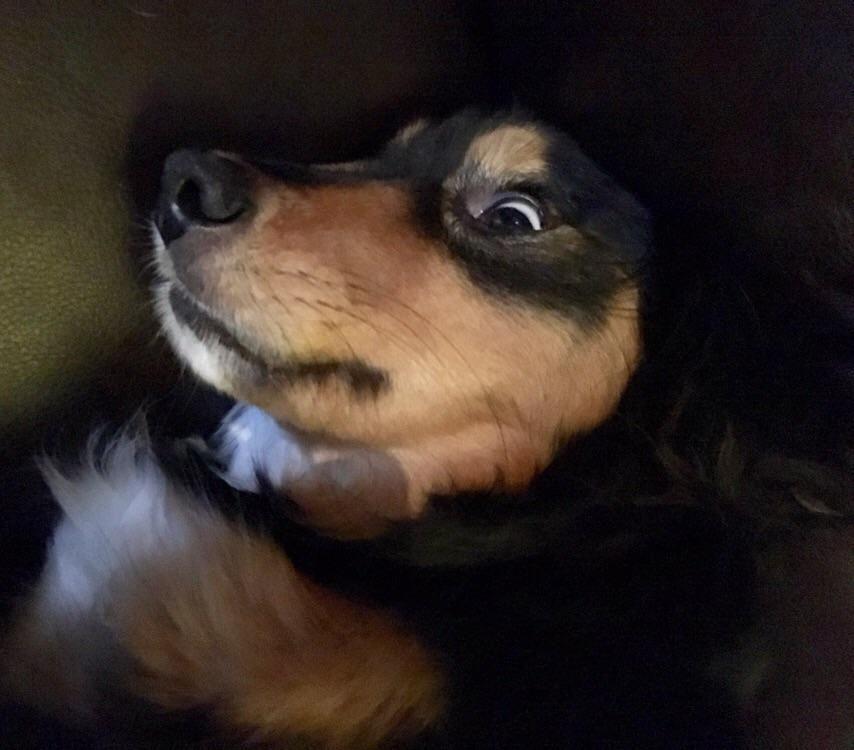 PsBattle: Dog fell asleep with eyes open