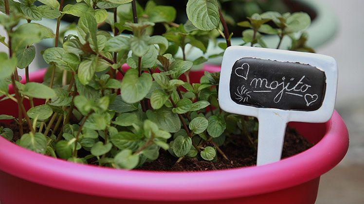 Mojito en eetbare planten pimpen jouw balkon!