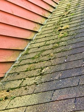 How To Clean Algae And Moss Off Asphalt Shingles Http Www Echomeinspection Com Fresno Home Inspection Blog How To Clean Roof Shingles Shingling Roof Cleaning