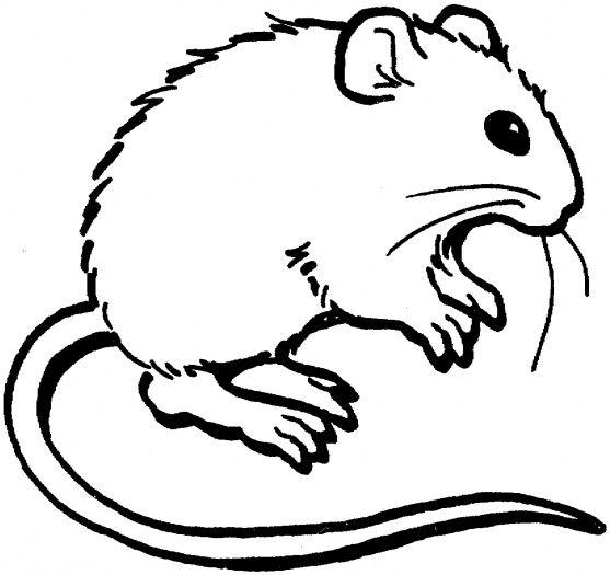 صور تلوين فئران 2014 صور رسومات فئران للأطفال جاهزة للتلوين والطباعة Mouses Coloring 2015 Animal Coloring Pages Coloring Pages Mouse Pictures