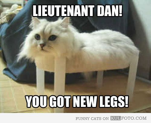 Lieutenant Dan Got New Legs Funny Cat Sitting On A Small Plastic Table Looking Like Lieutenant Dan From Forrest Funny Meme Pictures Funny Animals Bones Funny