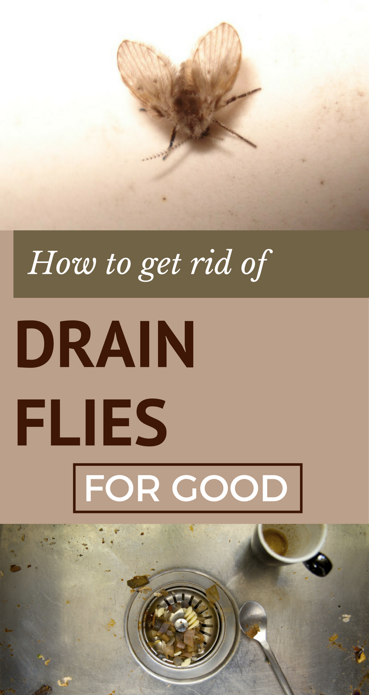 Here Is How To Get Rid Of Drain Flies For Good Cleaning Hacks Cleaning Painted Walls Deep Cleaning Tips